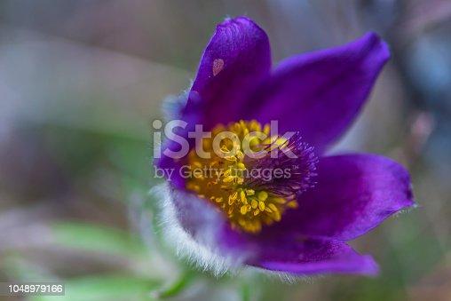 istock Wild flowers 1048979166