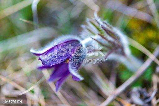 istock Wild flowers 1048979174