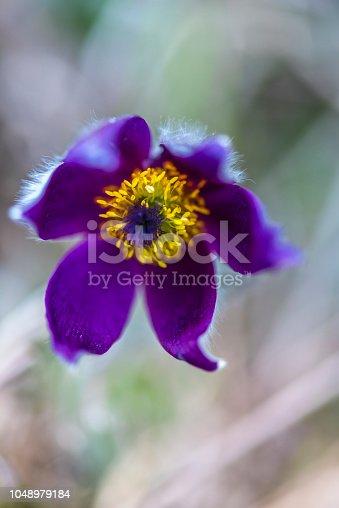 istock Wild flowers 1048979184