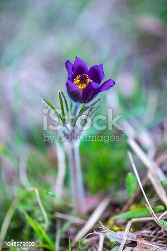istock Wild flowers 1048979200