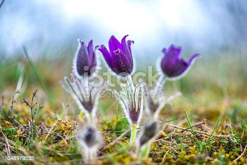 istock Wild flowers 1048979232
