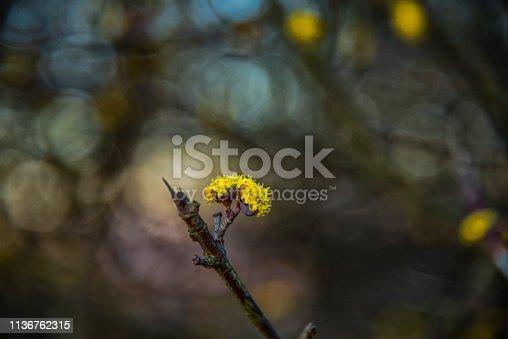 istock Wild flowers 1136762315