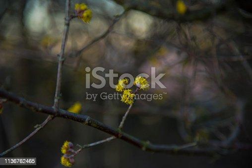 istock Wild flowers 1136762465