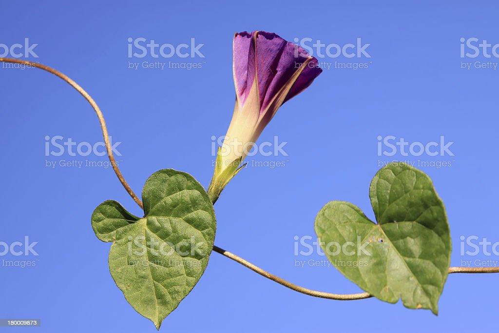 개척시대의 꽃 royalty-free 스톡 사진