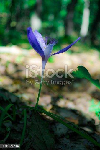 istock Wild flowers 842727716