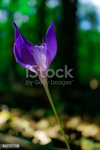 istock Wild flowers 842727728