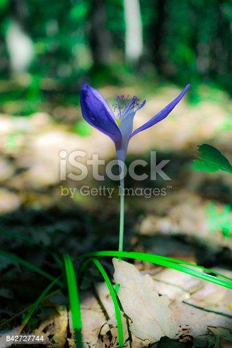 istock Wild flowers 842727744