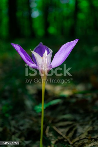istock Wild flowers 842727758