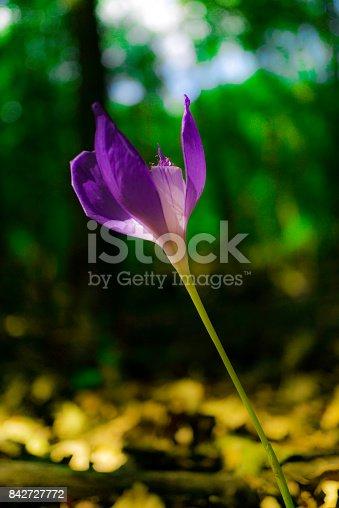 istock Wild flowers 842727772