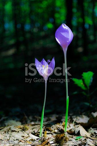 istock Wild flowers 842727792