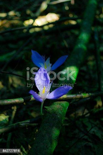 istock Wild flowers 842727814