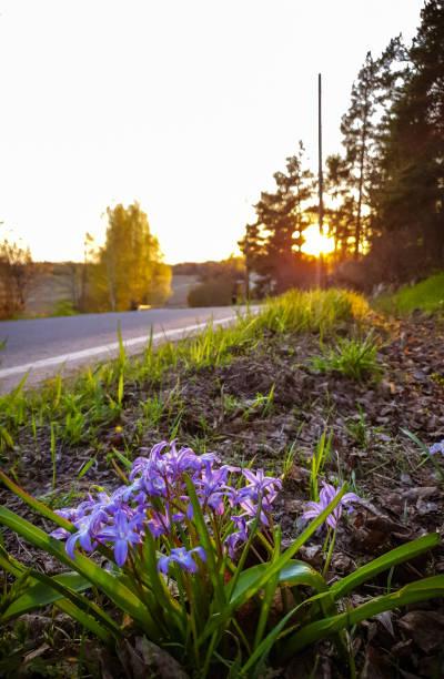 Flores selvagens  - foto de acervo