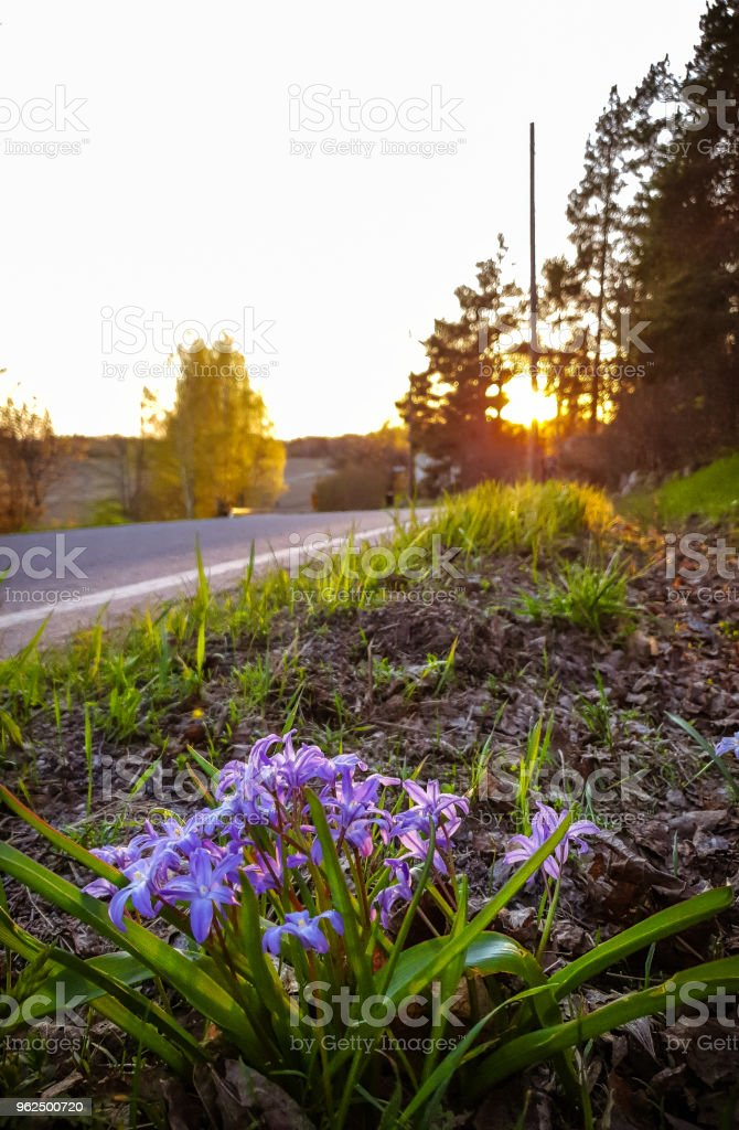 Flores selvagens  - Foto de stock de Europa - Locais geográficos royalty-free