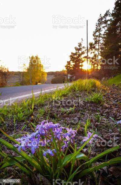 Foto de Flores Selvagens e mais fotos de stock de Europa - Locais geográficos