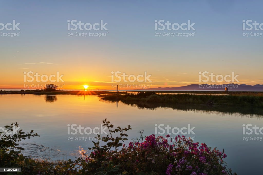 wild flowers with sunset light by a sea inlet in a park stock photo