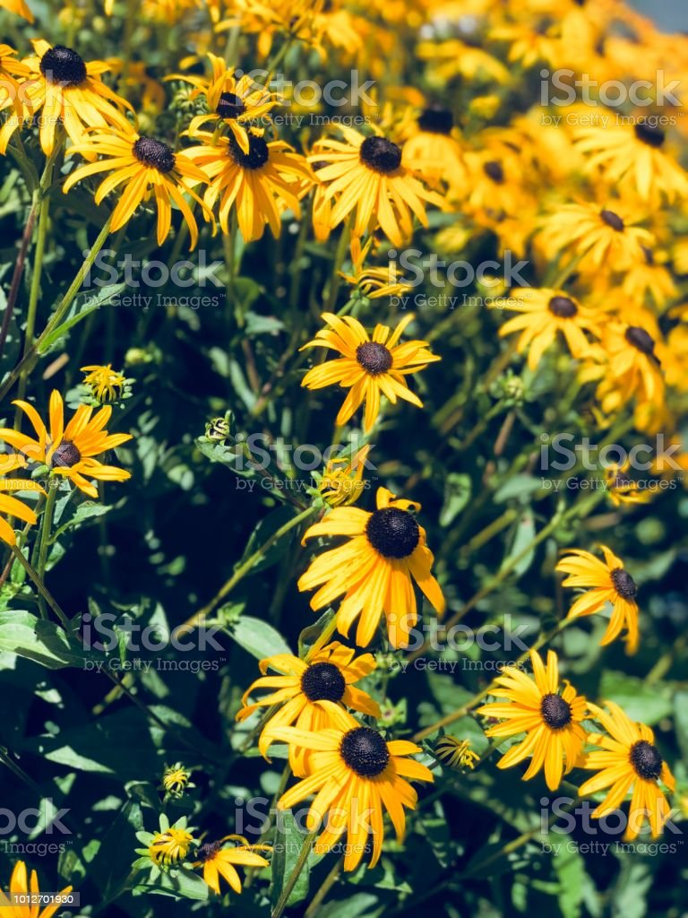 Wild Flowers Yellow stock photo
