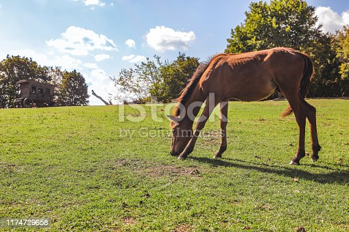 Wild foal grazing in the countryside