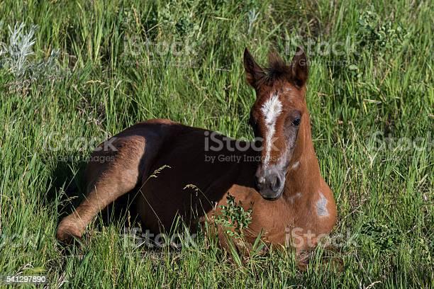 Wild foal in grass picture id541297890?b=1&k=6&m=541297890&s=612x612&h=1aqafu708ajar20jhijvsjjatsrzutw9tcfk7lr6 ow=