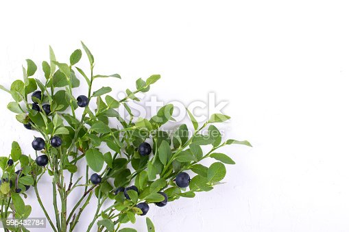 853493518 istock photo Wild forest  blueberries on the branches on white background 995432784