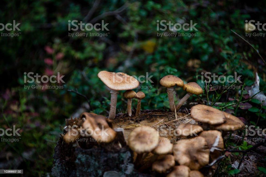 Wild Forest paddestoel foto