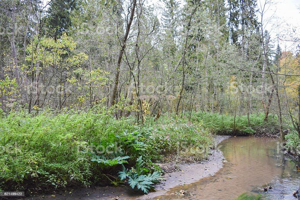 Wild forest river. Cold autumn of Siberia Lizenzfreies stock-foto