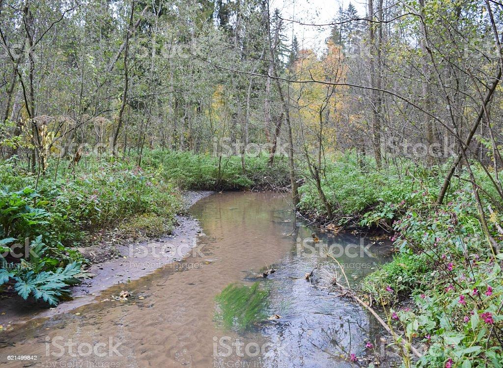 Wild forest river. Cold autumn of Siberia photo libre de droits