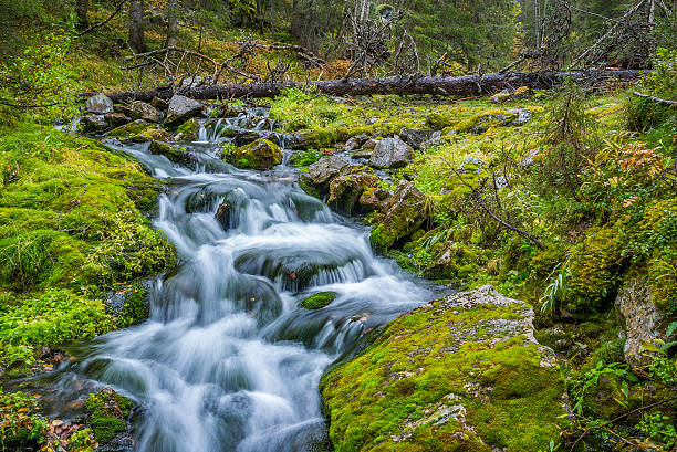 Wild forest stream stock photo