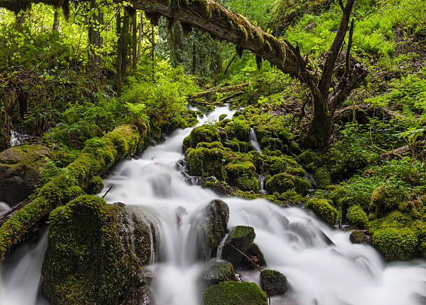 Wild forest waterfall idyllic green wilderness Clear mountain stream tumbling through moss covered rocks in an idyllic vibrant green forest wilderness. ProPhoto RGB profile for maximum color fidelity and gamut. hood river valley stock pictures, royalty-free photos & images