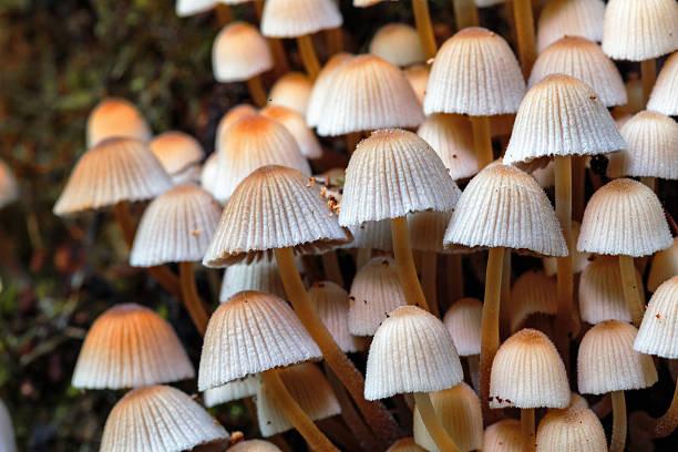 wild forrest mushroom – Foto