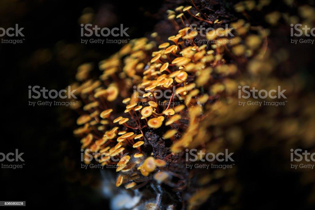 Wild Fungus stock photo