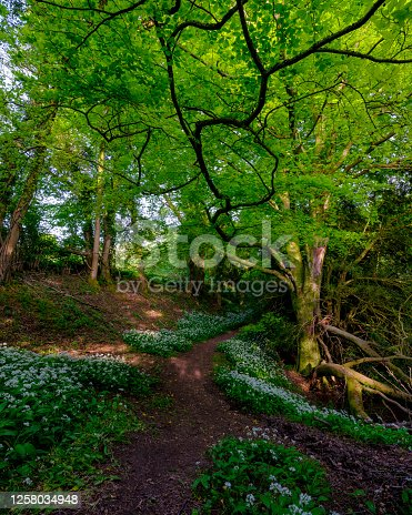 istock Wild garlic and country lanes in the Hangers above Petersfield, Hampshire, UK 1258034948
