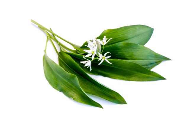 Wild garlic leaves isolated on white background picture id1175714601?b=1&k=6&m=1175714601&s=612x612&w=0&h=tlf c ra3byqxplrx9d7ereonb02bf2picu9fnhvr6u=