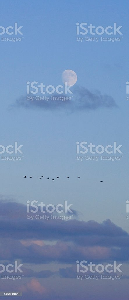 Wild geese and blue moon royalty-free stock photo