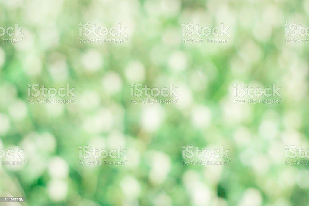 Wild globe everlasting or white flowers and lawn at thailand stock wild globe everlasting or white flowers and lawn at thailand royalty free stock photo mightylinksfo