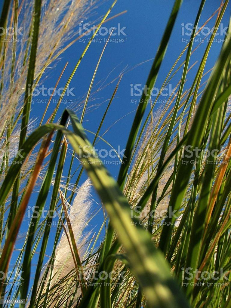 Wild hierba fondo foto de stock libre de derechos