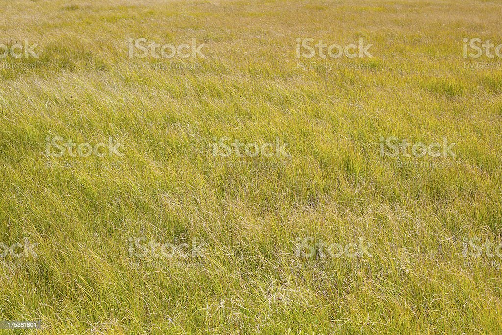 Wild grass field royalty-free stock photo