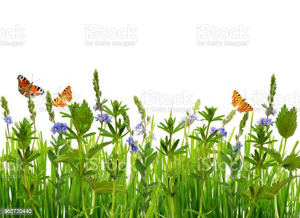 Wild grass flowers and butterflies picture id952720440?b=1&k=6&m=952720440&s=612x612&h=pcatetigb8wb5dkgzeedyg9nskykppndg0xp3sxjll0=