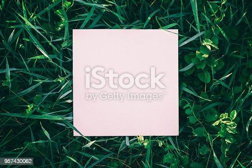 istock Wild grass frame 957430062