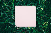 Wild grass frame