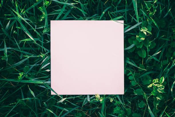 wild grass frame - folha de caderno imagens e fotografias de stock