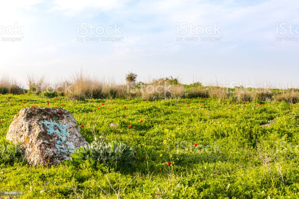 Wild grass hill with red poppies stone and dazzling sunlight royalty-free stock photo