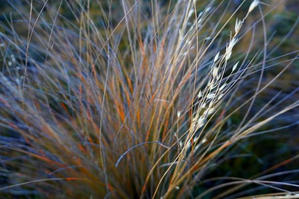 Wild grass in a close-up shot stock photo