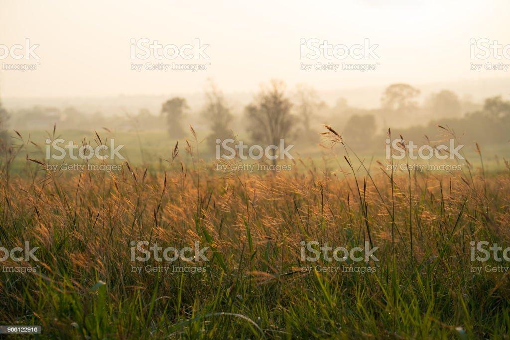 Vilda gräs i soluppgången - Royaltyfri Bildbakgrund Bildbanksbilder