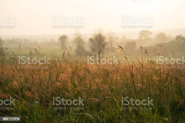 Vilda Gräs I Soluppgången-foton och fler bilder på Bildbakgrund