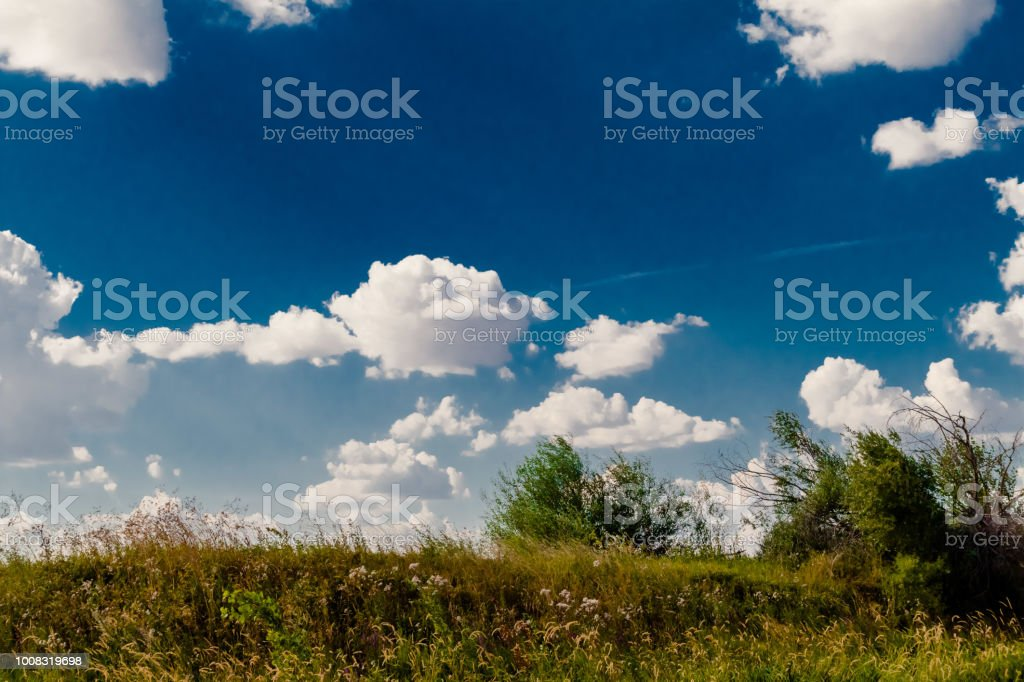 wild grass landscape in summer in sunny weather and blue sky