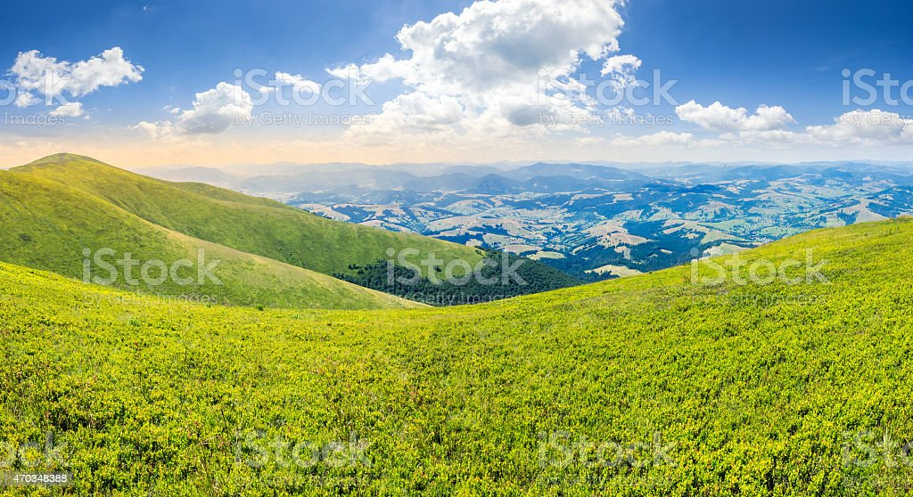 wild grass on mountain top stock photo