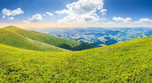 wild grass on mountain top stock photo