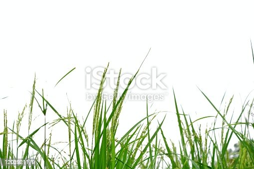 for green foliage backdrop with copy space