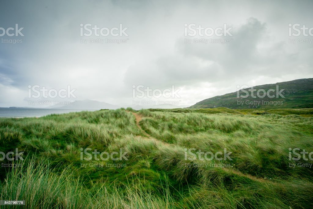 Wild grasses along the coast stock photo