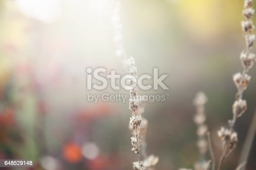 istock Wild grasses in the forest at sunset. 648529148